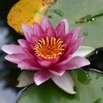 Teichbecken schaffen eine tolle Atmosphäre im Garten